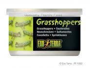 Exo Terra Grasshoppers 34g