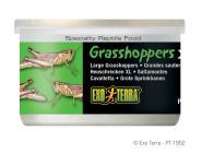Exo Terra Grasshoppers XL 34g